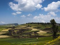 Fields and agriculture in rolling hills stock image