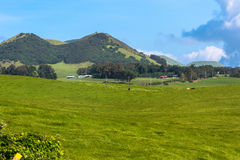 Fields along Kohala Mountain Road, Hawaii Royalty Free Stock Photos