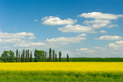 Fields And Trees In Spring Stock Photography
