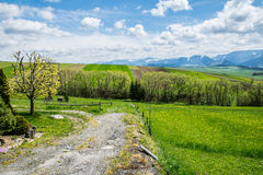 Fields as like carpets. Beautiful fields that looks to me like carpets royalty free stock images