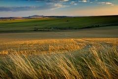 Fields in august 2 Stock Photo