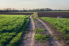 Fields in Austria. Country road in Rabensburg, small town in Austria near the Slovakian border stock photo