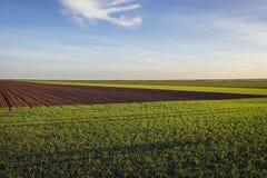 Fields in Austria. Plwed field near Rabensburg village in Austria royalty free stock image
