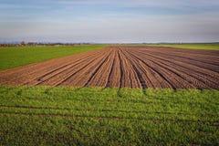 Fields in Austria. Plwed field near Rabensburg village in Austria royalty free stock photo