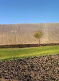 Fields in autumn. Layers of fields with single plant in autumn time stock photography