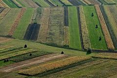 Fields autumn crops. Fields with different geometric shapes with autumn crops Royalty Free Stock Photography