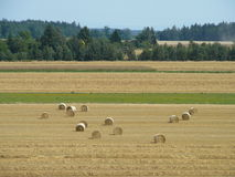 Fields Stock Images