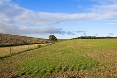 Fields in autumn Royalty Free Stock Photos