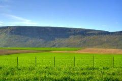 Fields of Balcarce stock photography