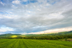 Fields of barley. Fields of green barley and wheat in sunny day Royalty Free Stock Photography