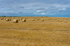 Fields of barley. Hay bales drying in the autumn sun ready for winter feed stock photography