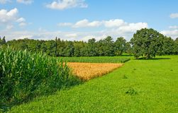 Fields in Bavaria Royalty Free Stock Photography