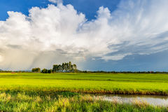 Fields and Beautiful Clouds Stock Images