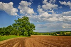 In the fields. Beautiful day in August in the Czech countryside Stock Image