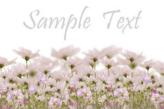 The fields beautiful flowers Royalty Free Stock Photography
