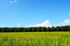 Fields beautiful Royalty Free Stock Photos