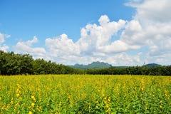 Fields beautiful Stock Photos