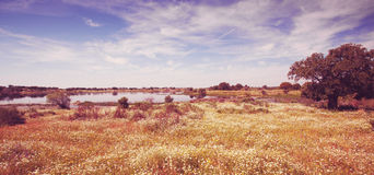 Fields in a beautiful summer landscape. Meadows in Extremadura, Spain Royalty Free Stock Photography