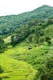 fields berg royaltyfri bild