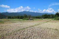 fields berg Arkivbilder