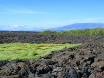 Lava fields, Punta Moreno,  Galápagos Stock Images