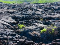 Lava fields, Punta Moreno,  Galápagos Royalty Free Stock Images