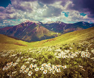 Fields of blossom flowers in the Caucasus mountains Royalty Free Stock Photography