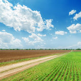Fields and blue cloudy sky Stock Image