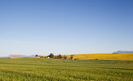 Fields and blue skies Stock Image