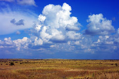 Fields with blue sky Stock Image