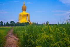 Fields of Buddha. Sky of fields Stock Images