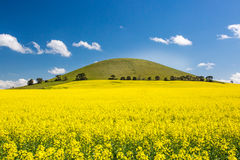 Fields of Canola in Australia Royalty Free Stock Photo