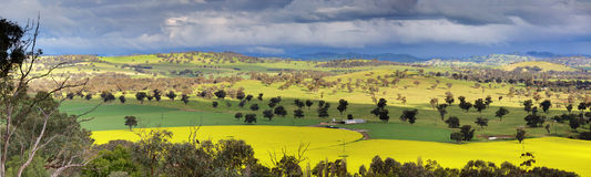Fields of Canola and farmlands panorama Royalty Free Stock Photo