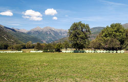 Fields of Castejon Royalty Free Stock Images
