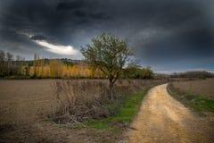 Fields of Castile. In autumn Stock Photos