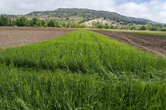Fields of Castile Royalty Free Stock Photography