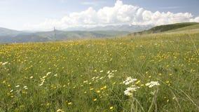 Fields of caucasus. The North Caucasus. Foothills of Elbrus. Summer 2009 Stock Photos