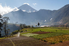 Fields in central Guatemala. Various fields in central Guatemala royalty free stock photos