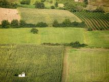 Fields of cereals and vineyards Royalty Free Stock Photos