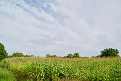 Fields of cheshire. Quarry bank mill wilmslow Cheshire England united kingdom stock photo
