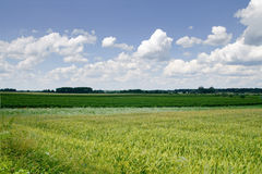 Fields and clouds Royalty Free Stock Images
