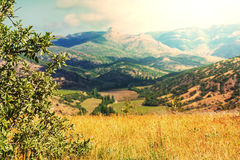 Fields in Crimea Stock Photos