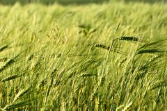 Fields in Crimea Royalty Free Stock Photography
