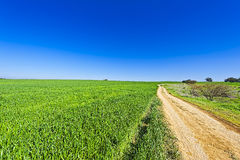 Fields and Cural Curving Road in Israel Royalty Free Stock Images