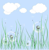 Fields dandelion. Background of sky, clouds and dandelions growing in the grass Royalty Free Stock Images