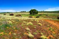 fields den ensamma treen utah Arkivbild