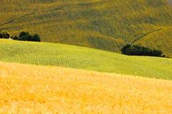 fields den italy sommaren Arkivfoton