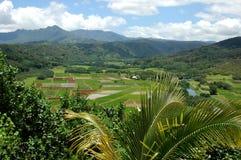 fields den kauai taroen arkivfoto