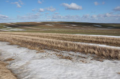 Fields in early spring Stock Photo
