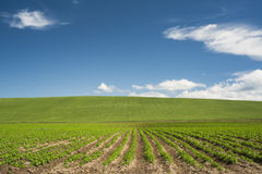 Fields in the end of spring Stock Image